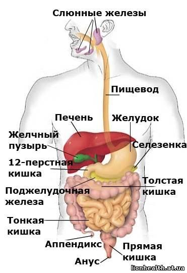 фотографии органов: